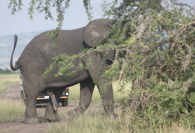 Gorilla Tracking Safaris Uganda
