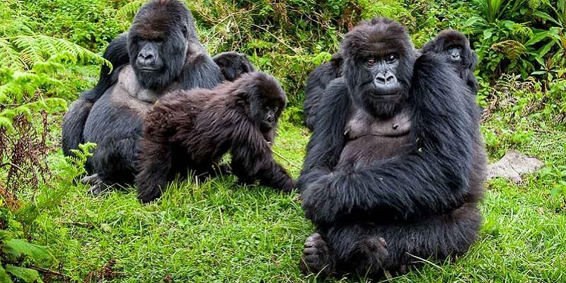 Gorilla Trekking Permit Price