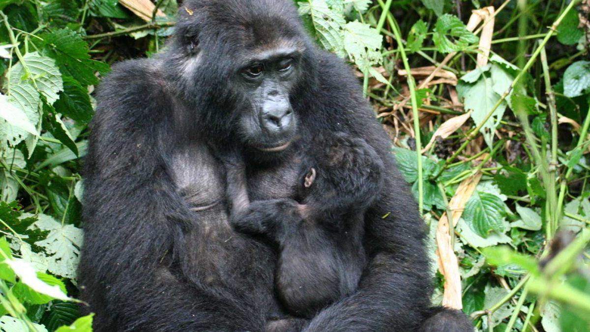 Acacia Safaris Uganda