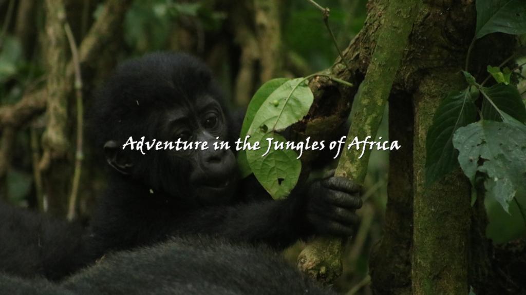 Bwindi Gorilla Trekking safari