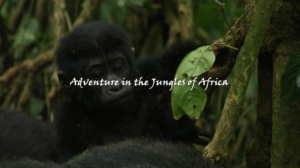 Trekking Gorillas in Rwanda