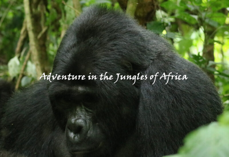 GorillaTtrek Rwanda