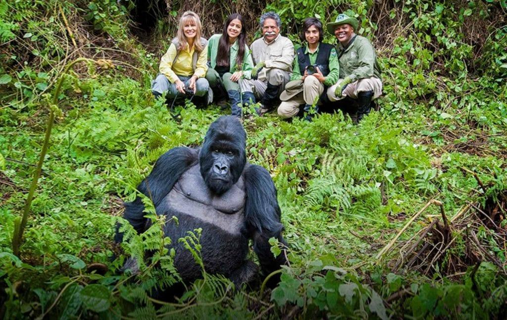 Where are the mountain gorillas in Rwanda